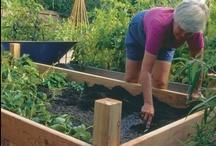 Outdoorsy/gardening stuff / by Michele Sanchez