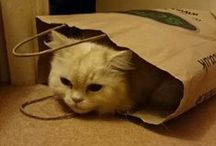 Animals <3 schuh / Sometimes people send us pictures of their pets hiding in schuh bags and boxes. Usually cats. Here they are...