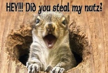 A little on the squirrel-ly side!* / Those crazy, goofy little rodents!! / by Kim Callahan