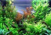 Aquarium -- Planted Tanks....* / One day....... / by Kim Callahan