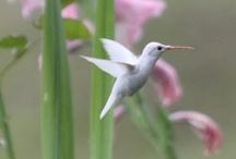 HUMMMMMMM-ers!! / Tiny flying jewels..... / by Kim Callahan