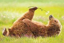 "Big ol' ""teddy bears""!!* / Just what the title says---BEARS!! :) / by Kim Callahan"