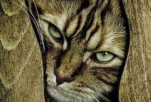 Cats / by Jonna Vejrup