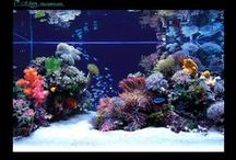 Getting Tanked! / Ideas for our salt water tank  / by Stacy Crnkovich