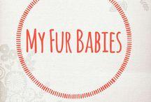 My Fur-babies.