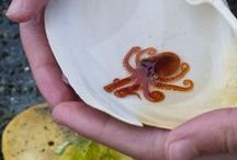 Invertebrates in the Sea... / Sea creatures without a backbone.... / by Kim Callahan