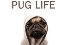 Waffles H. / Pug Life.