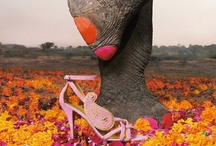 etc: elephants