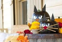Fall Decorating / by Catherine Aileen