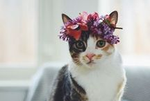 . MAED FOR | Cats . / cats