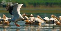 Danube Delta - Romania WOW / Danube Delta, Unesco site in Romania