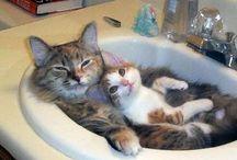 Animals-Cute,Sweet,Loving,Funny / by Cindy Hazelwood