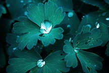 ❊ Teal   / by Anna ✿ K.