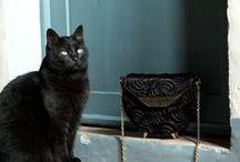 Animals / Our family pets being super cute!!  http://www.glasshandbag.com