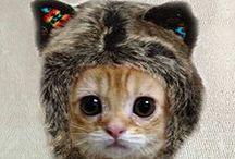 Freakin' Kittens...