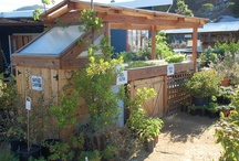 Urban Farming & Alternative Living / Agriculture in my backyard, Aquaponics, Alternative living and closed loop systems. / by Jean April Metica
