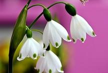 Beautiful Blooms / by Jean April Metica