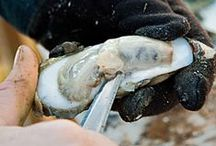 Oyster Roast / by Elizabeth Demos