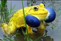 Frogs / by Stacie Clark-Benson