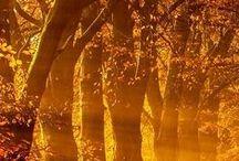Autumn Splendor / by Christina Mott