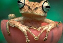 Amphibians, Reptiles / by Becky O'Day