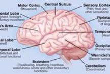 Medical Terminology / Psychology, nursing, medicine, etc. / by Destiny Brooks