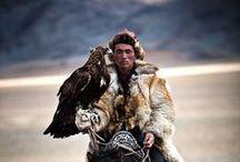 l'art de la fauconnerie et rapaces