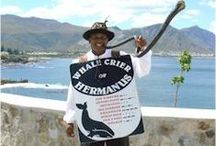 Hermanus / Best land based whale watching & home to Pinot noir & Chardonnay