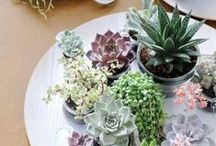 Sweet Succulents / Add more green to each of your rooms by adding succulents. Everything you need to know about caring for your little plants.