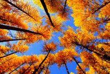 Fall / by Julia