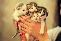 Cuteness! / by Stevie Braun