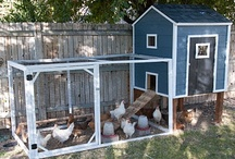 Chickens! / Stuff we need, stuff we want, and other stuff. / by Craftsman Junky