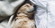 """Animal Love / """"A dog is the only thing on earth that loves you more than he loves himself.""""  ― Josh Billings"""