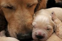Dogs! / Dogs are so sweet!!!!!!!