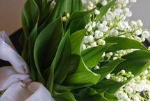 FLOWERS, PLANTS, TREES / by Marilynn Mc Laughlin