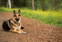 Photos of our Dog, Winston