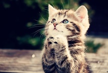 Praying Cats / by Karen Bumstead