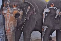 folkloric menagerie / painted pachyderms and curried camels