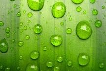 İl Colore (Verde) / by Aslihan Kaya