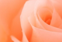 İL Colore (peach) / by Aslihan Kaya
