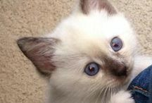 My Pets / My fur babies!  <3