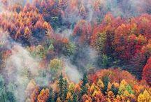 Foliage / Autumn Fall Herfst  #Foliage #Autumnal #Herbst