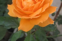 flowers / by Baishali Sen Choudhury