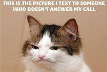 Funnies! =) / by Annie D.