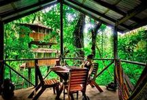 Community Environs - Arborabode / Arborabode: Dwelling in the Trees, any home or other structure that is among the trees, whether attached to them or on stilts, is at least at tree height - allows shrubs to grow beneath it {IDEAL FOR TROPICS} / by Rua Lupa