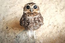 We love...OWLS / Funny little quirky owls - photos, illustrations and all sorts of cuteness!
