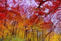 Sensational Seasons / by Ainsley Warczak