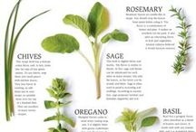 in the herboretum / {all about herbs... from the garden to the kitchen}