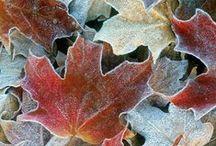 Fall / by Alexandra Girel Photographe