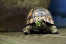 turtle / by Nao Kobayashi